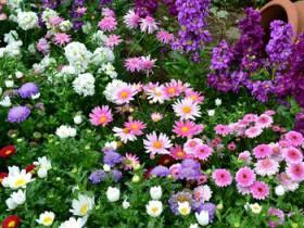 Объявлен конкурс «Поселок в цветах – счастье в домах»